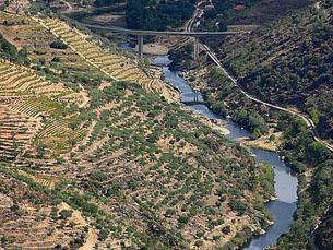 Ambientalistas não vão participar mais na Comissão de Acompanhamento Ambiental do Aproveitamento Hidroelétrico de Foz Tua
