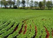 Mudança de hábitos na agricultura pode ajudar ao aumento da produtividade
