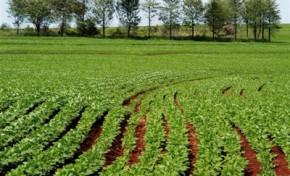 Prazos para agricultores se coletarem nas Finanças vai até 31 de Maio