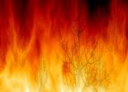 Incêndio florestal destrói três hectares de mato e olival