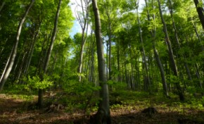 Florestas tem inúmeras potencialidades para a economia do País