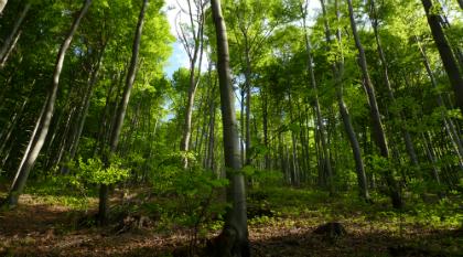 Instituições do ramo florestal pedem mais apoios