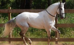 I Encontro Equestre em Grijó é este fim-de-semana