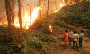 Incêndio em Vimioso dominado, após lavrar cerca de 40 horas