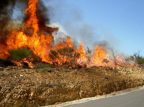 Reacendeu o incêndio do concelho de Vinhais que foi dado como dominado esta madrugada