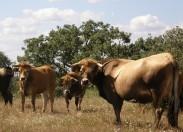 Projeto leva promoção da Carne Mirandesa aos mercados internacionais