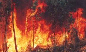 Incêndio que deflagou esta manhã na Quinta da Caida está em fase de rescaldo