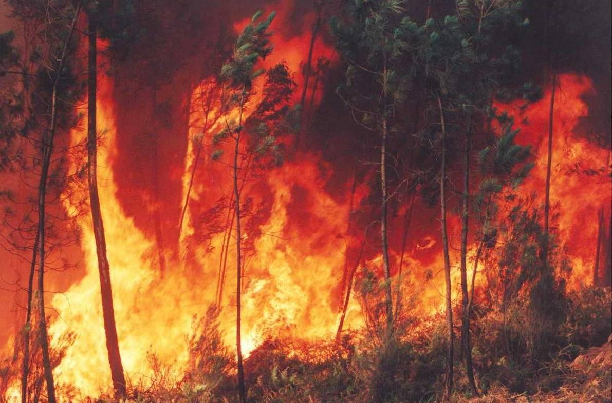 Detido por incêndio florestal em Vinhais