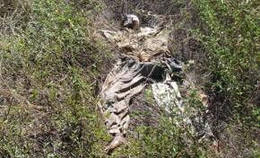 Encontradas ossadas que poderão pertencer a idoso desaparecido
