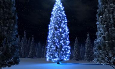 Iniciativa das árvores de Natal termina com balanço positivo