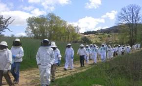 Setor do mel é alternativa ao desemprego jovem