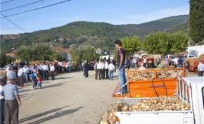 Cebola rainha! 30 toneladas vendidas em Chacim