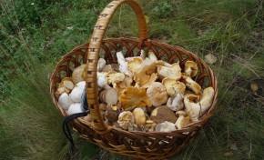 Noruegueses em Mogadouro à descoberta de cogumelos