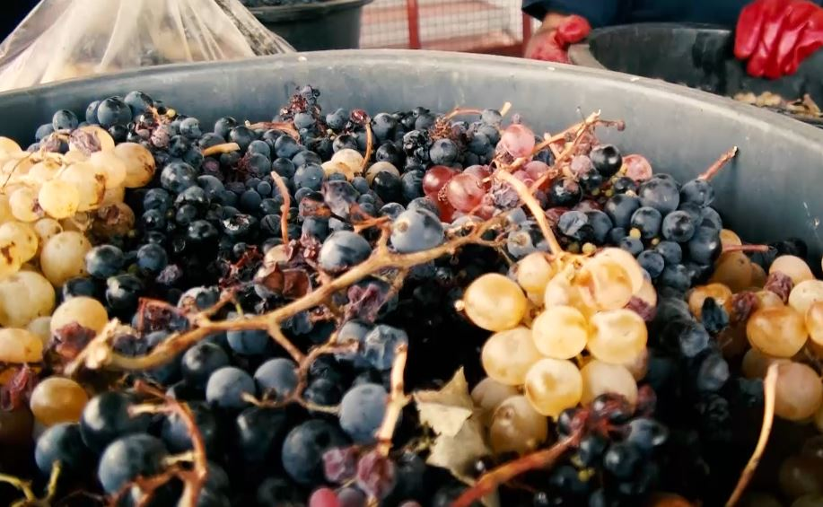 Milhares de pequenos e médios viticultores podem deixar a atividade nos próximos anos