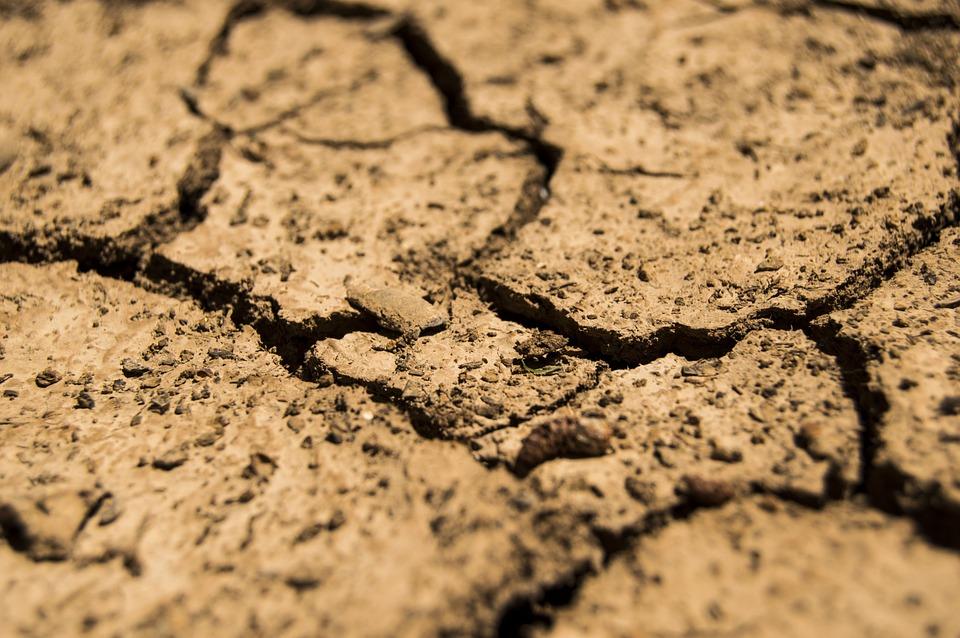 Quercus alerta para os problemas da seca severa