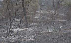 Macedo de Cavaleiros e Freixo de Espada à Cinta podem agora pedir apoios pelos prejuízos com os incêndios