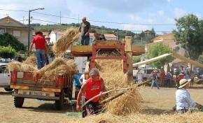 """Cerca de 100 """"segadores"""" juntaram-se este domingo para manter a tradição em Morais"""