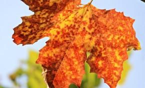 O que os macedenses acham do outono