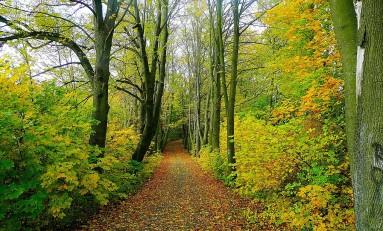 10 milhões de euros para zonas de intervenção florestal na região Norte