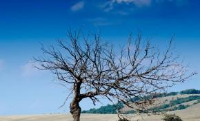 Trás-os-Montes é uma das regiões do mundo que mais deverá sofrer com os efeitos das alterações climáticas