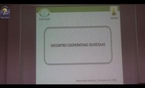 ONDA LIVRE TV - Cooperativa Agrícola regista melhor campanha de azeite em 2017