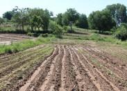 Trovoada e chuva forte causam prejuízos em várias zonas do Distrito de Bragança