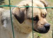 AMTQT defende adoção para contornar sobrelotação de animais nos centros de recolha