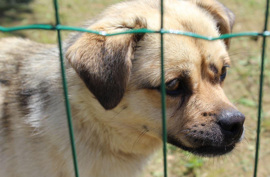 """""""Feira da Adoção"""" dá novo lar a animais abandonados"""