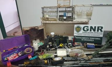 Homens detidos por captura ilegal de aves em Castelãos (Macedo de Cavaleiros)