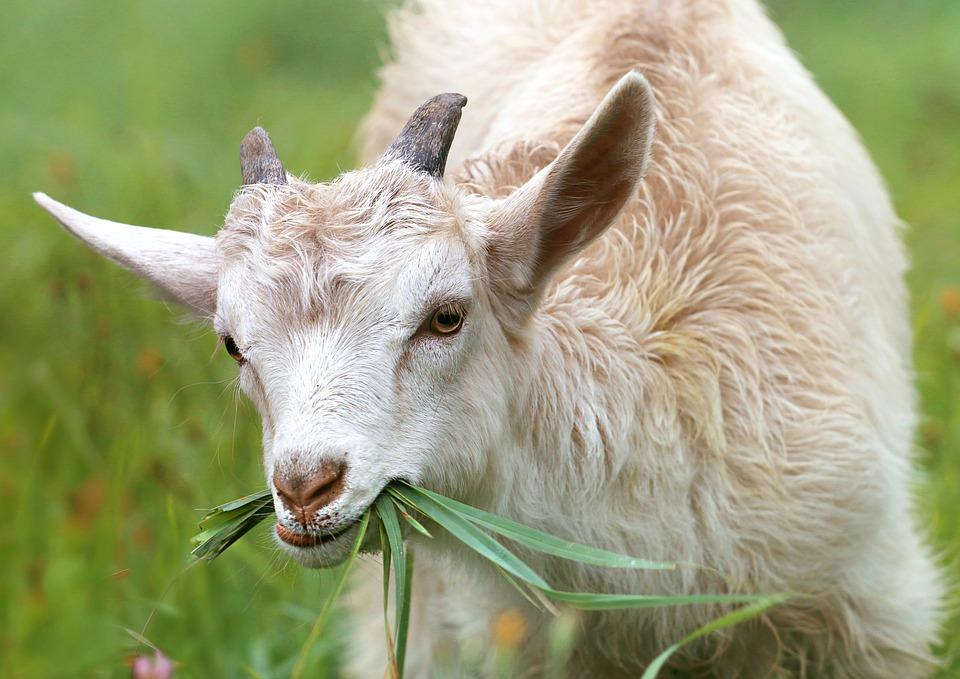 Produtores de gado do concelho de Bragança passam a pagar apenas metade do valor em controlo de sanidade animal