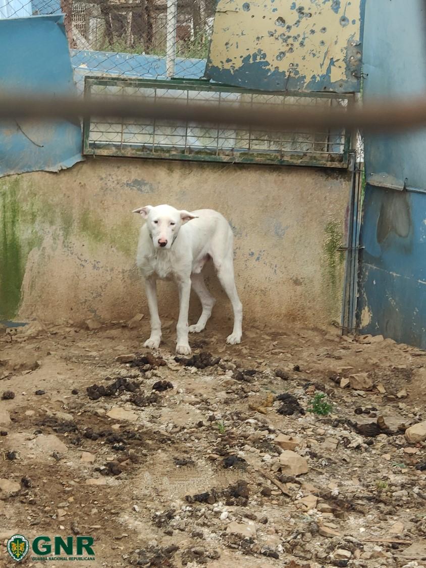 Homem detido por ter animais em casa sem condições de sobrevivência