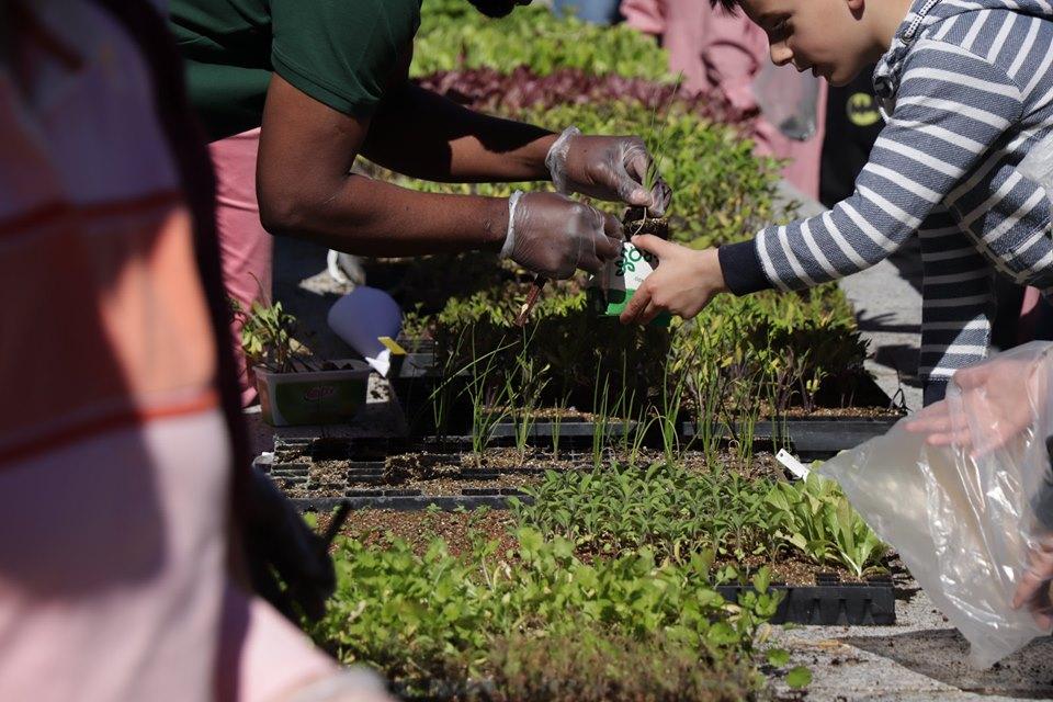 IPB ofereceu plantas a quem passou ontem pela Praça da Sé e pelo Eixo Atlântico em Bragança