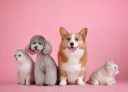 Covid-19: e os animais de estimação?