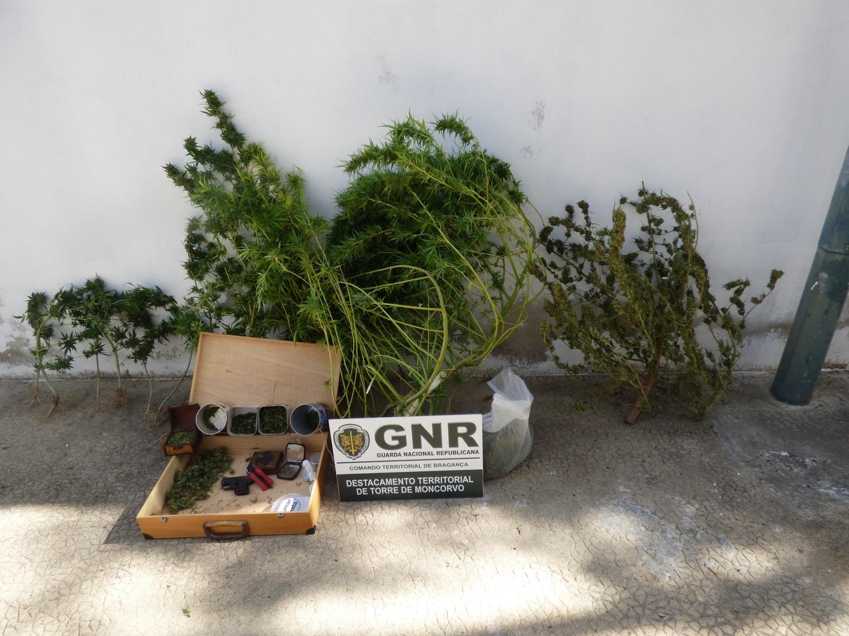 Homem detido em Ligares por cultivo de cannabis