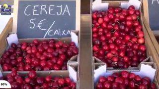ONDA LIVRE TV – Lamas promove I edição da Festa da Cereja