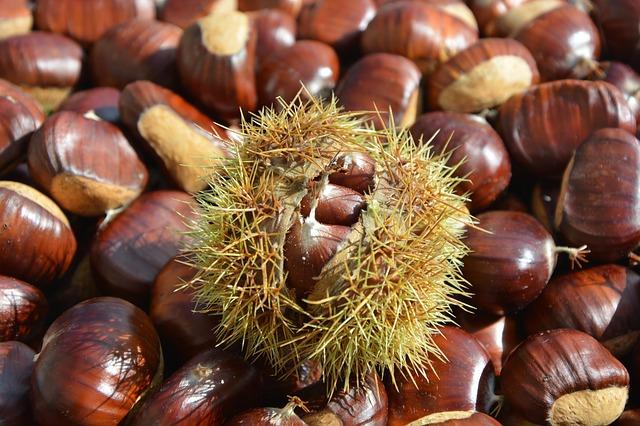 Falta de qualidade dos castanheiros é entrave à produção de castanha na região