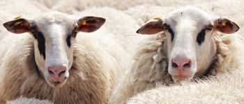 Município de Bragança comparticipa sanidade animal e reduz preço do abate no matadouro municipal