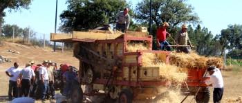 Tradição da Ceifa e da Malha do cereal atraiu este domingo visitantes à aldeia de Morais