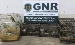Homem detido por caça ilegal no concelho de Torre de Moncorvo