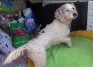ONDA LIVRE TV  - Campanha da Onda Livre angaria perto de 400 kg de ração para cães em abrigo
