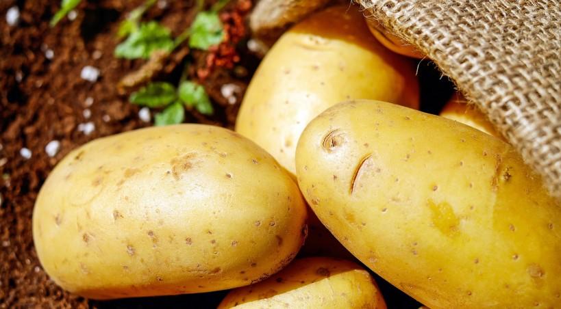 Plantações de grande escala de batata têm vindo a perder relevo na região transmontana